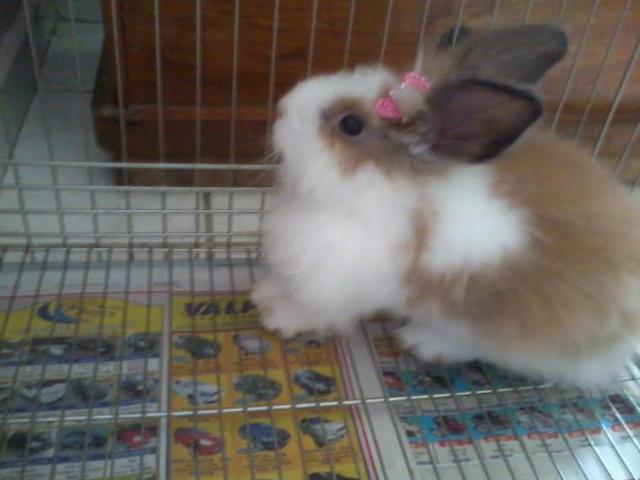 mini coelha fuzzy com gaiola!!! super promoção!