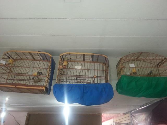 vendo o meu platel de aves  10 pixarro mancho 4 femea  3gaiola voadeira 1metro cada 12000;00= 10x