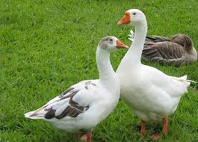 orientação - vendo diversas aves
