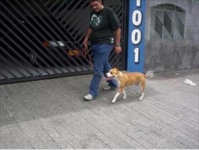 adestramento de cães tatuapé