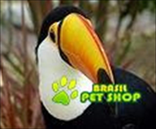 vinhedo ; campinas , s�o paulo: araras , tucanos , papagaios ; lories bornel , periquito ingles