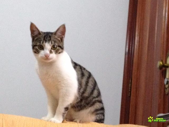 filhotes de gato machos de 8 meses para doação