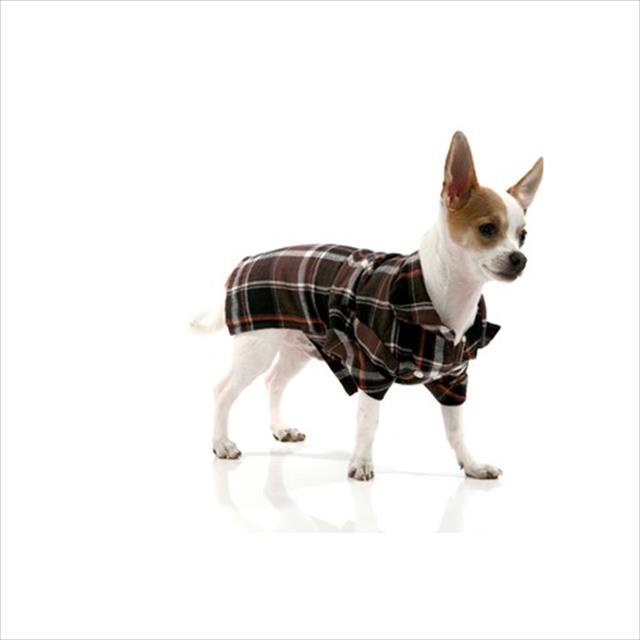 camisa xadrez bichinho chic - marrom camisa xadrez marrom - tam 04