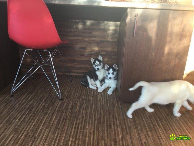 meus filhotes de cachorro roncos para realojamento
