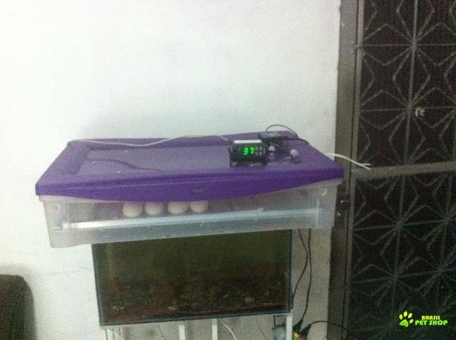 chocadeira 50 a 60 ovos viragem automática digital  rj