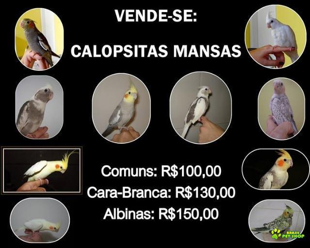 venda de pássaros exóticos - juiz de fora