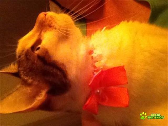 cat sitter (cuidadora de gatos) rio de janeiro