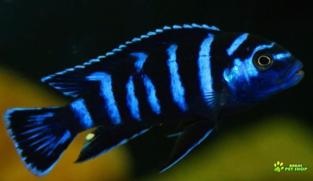 peixes no atacado e varejo