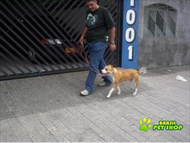 adestrador de cães tatuapé